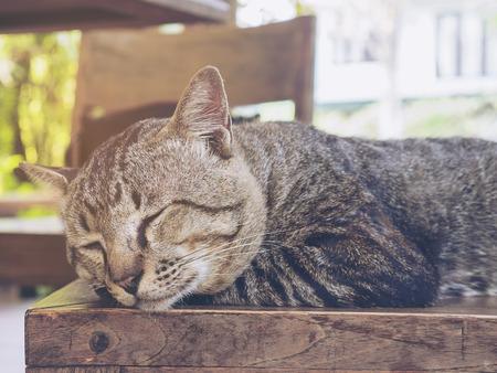 Lovely lazy cat Thai home pet