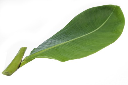 Green banana leaf isolated on white