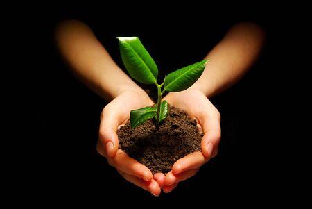 Photo pour Hands holding sapling in soil - image libre de droit