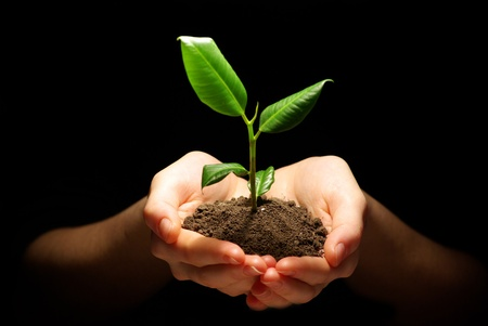 Photo pour Hands holding plant in soil on black - image libre de droit