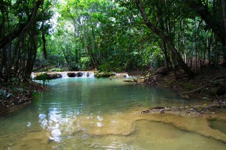 Stream in the tropical fores