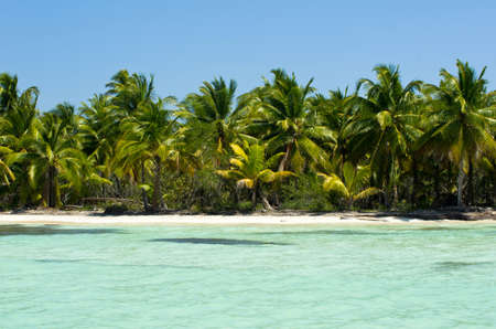 beautiful beach and tropical