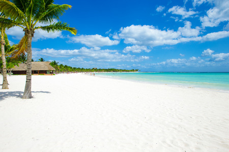 Photo for Palm and tropical beach - Royalty Free Image