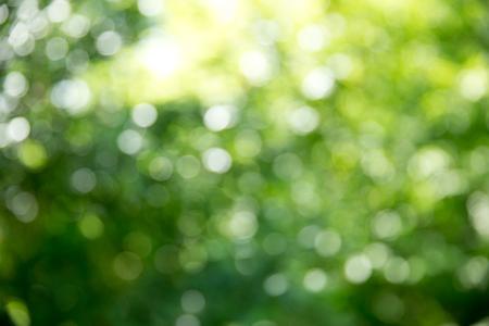 Foto de Green bokeh background and sunlight - Imagen libre de derechos