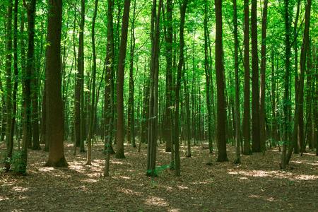 Photo pour Forest trees. nature green wood sunlight backgrounds - image libre de droit