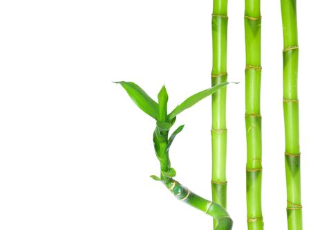 Photo pour green bamboo isolated on a white background - image libre de droit