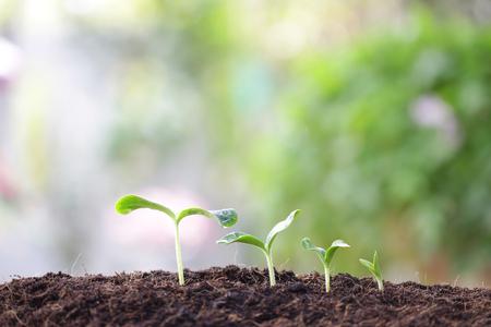 Photo pour small tree sapling plants planting with dew - image libre de droit