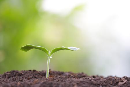 Photo pour small tree sapling plant planting with dew - image libre de droit