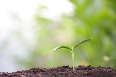 Photo pour Young green plant with dew growing - image libre de droit