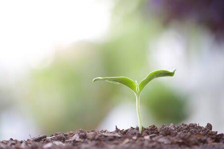 Photo pour Young green sapling planting with water drop dew - image libre de droit