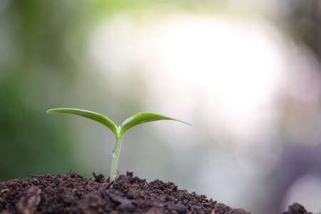 Photo pour Young green plants growing in the morning - image libre de droit