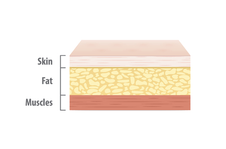 Layers of skin illustration vector on white background. Medical concept.