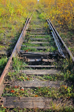 The old railway. Grass.