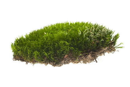 Foto de moss isolated on white background - Imagen libre de derechos