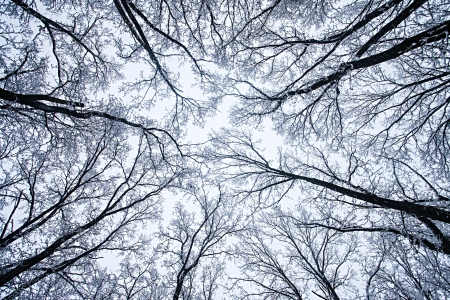 Frozen Trees In A Winter Forest