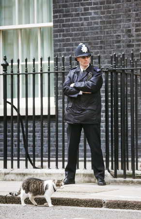 LONDON, UK - Apr 19, 2017: Metropolitan police officer on duty and the cat named Larry the 10 Downing Street cat and Chief Mouser to the Cabinet Office. Larry is a brown and white tabby.