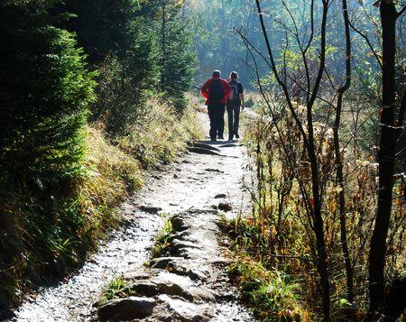 Friends walk through the forest