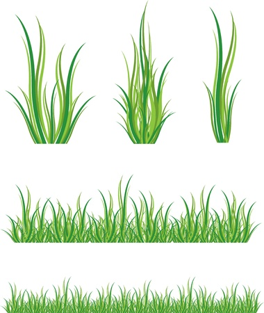 set of green grass and shrubs