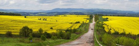 A gentle morning in the rapeseed fields, Ukraine. Symbolic colors are yellow-blue like the flag of the country, golden and heavenly. The old Soviet highway to the mountains of the Carpathians