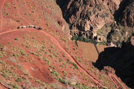 a Grand Canyon mule train on the lower South Kaibab Trail