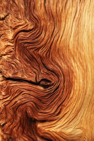 contorted brown and tan wood grain from alpine pine tree roots