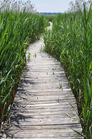 boardwalk trail through a marsh at Plum Island