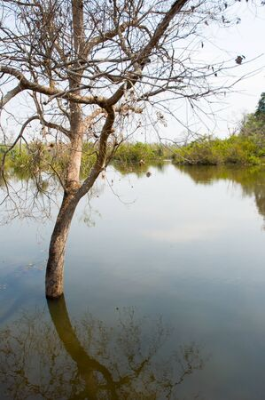 tree on water in Cambodia