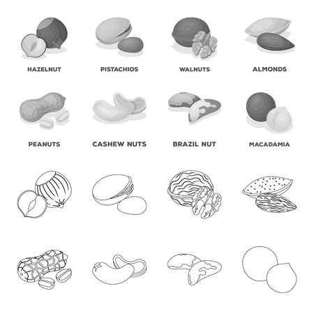 Different kinds of nuts set collection icons vector symbol stock illustration web.