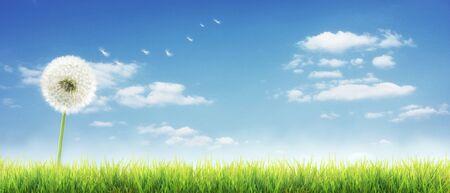 Photo pour Beautiful dreamy spring nature backgound - image libre de droit
