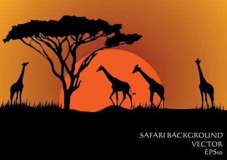 Ilustración de Silhouettes of giraffes in safari sunset background vector illustration - Imagen libre de derechos