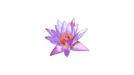 Photo pour water lily or lotus flower isolated on white background - image libre de droit