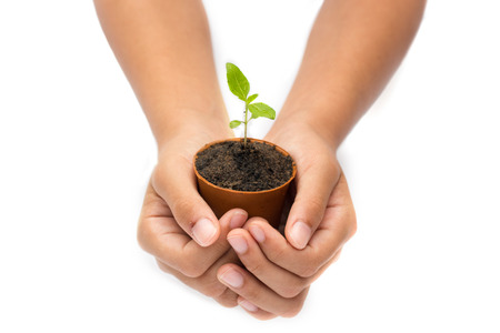 Hand and plant isolated on white background