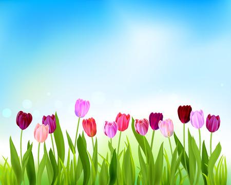 Tulip spring banner card