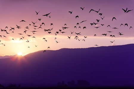 Flock of Birds Flying at the Sunset above Mountian in Golan Heights (North of Israel)