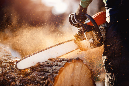Photo for Chainsaw. Chainsaw in move cutting wood. Man cutting wood with saw. Dust and movements. - Royalty Free Image