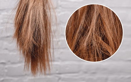 Foto per Brittle dull hair, damaged root structure female gray background. - Immagine Royalty Free