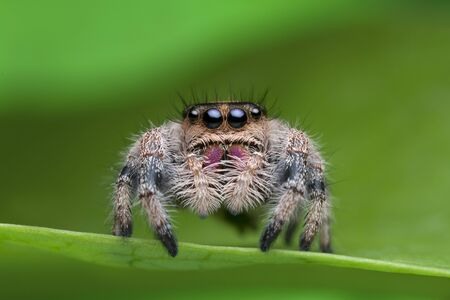 Photo pour jumping spider on green leaf in nature - image libre de droit
