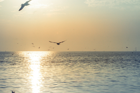 Foto de Seagulls flying at sunset vanilla sky little white clouds over the sea peacefulness beautiful nature background - Imagen libre de derechos