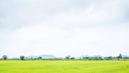 Photo pour green rice field in summer sunshine beautiful joyful moment with summer mountain landscape.Rural landscape with mountains, hills, fields. Countryside nature skyline background Meadows with mountains. - image libre de droit