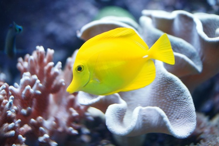 Tropical Yellow Fish Wall Mural