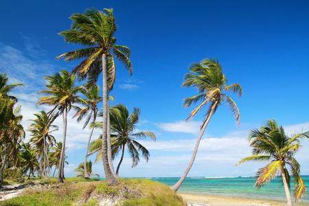 Tropical Palm Beach
