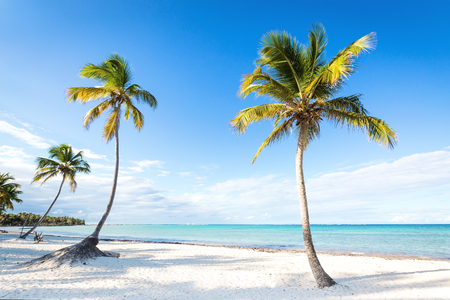 Photo for Coconut palm trees an pristine bounty beach close to sea. Travel, tourism, vacation concept tropical background - Royalty Free Image