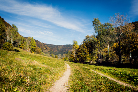 Trail in the black forest, feldberg tower in the background, tourism location