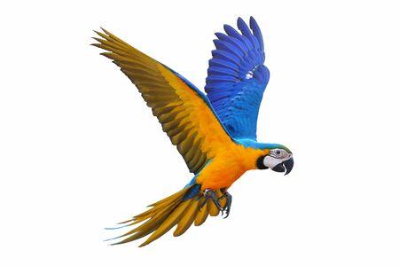 Photo pour Macaw parrot isolated on white background. - image libre de droit