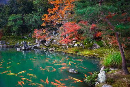 Photo for Autumn landscape, Japan - Royalty Free Image