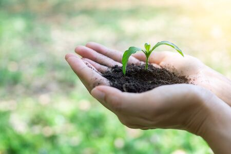 Photo for Environment Earth Day In the hands of tree growing. Environment concept, Beginning concept. - Royalty Free Image