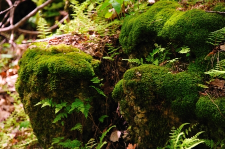 Moss Covered Rock at Wildcat Mountain State Park, Wisconsin