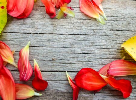 Photo pour yellow apricot leaves and rose petals on a wooden board. place for text - image libre de droit