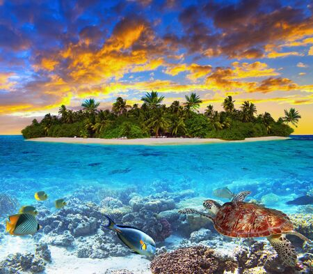 Photo pour Tropical island of Maldives on the Indian Ocean at sunset with marine life - image libre de droit