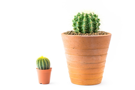 Close up of shaped cactus with long thorns on clay pots white background.